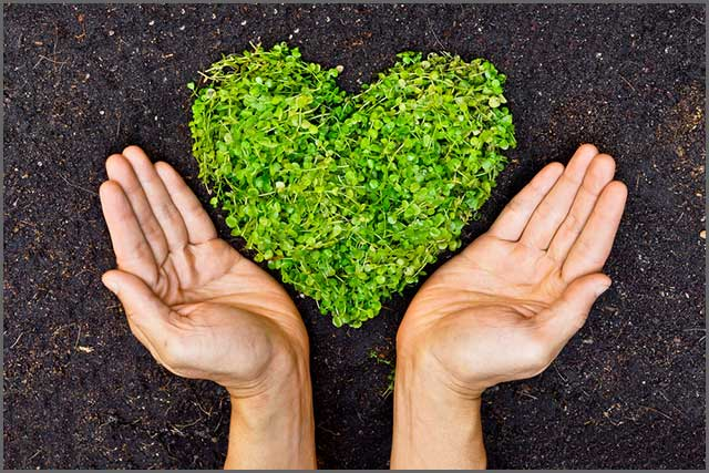 Heart made of plants with human hands